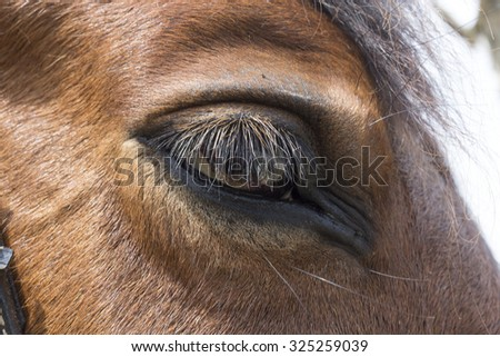 Brown horse eye - stock photo