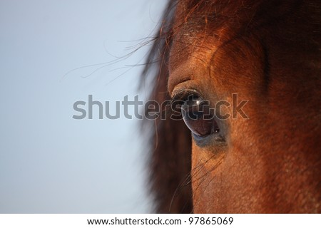 Brown horse eye close up - stock photo