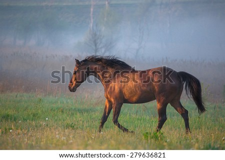 brown horse go in the summer morning - stock photo