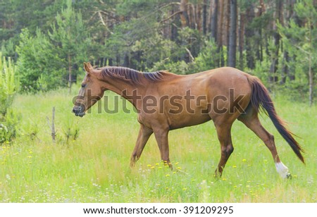 brown horse goes at the green forest on fresh grass