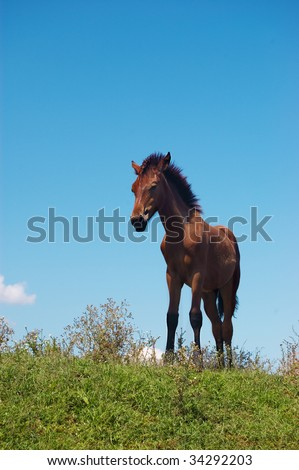 Brown horse grazing over blue sky