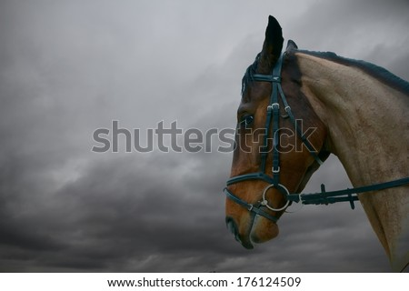 Brown horse head and neck close up against cloud - stock photo