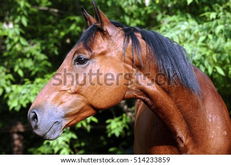 Brown horse headshot on a background of green leaves in summer farm