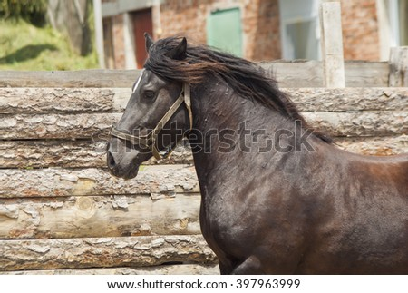 brown horse in a halter standing next to a wooden fence