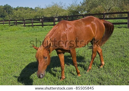 Brown horse in fenced pasture land