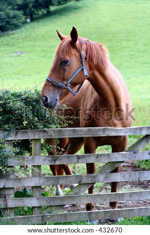 Brown horse in field with gate - stock photo