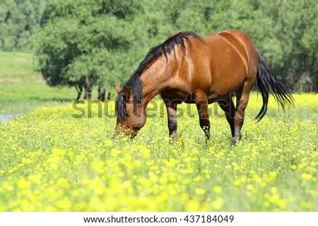 Brown horse in nature - stock photo