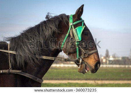 Brown Horse in stable - stock photo