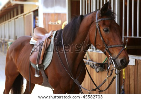 Brown horse in stable door rigged with saddle and reins - stock photo