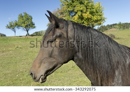 Brown Horse In the green Nature - stock photo
