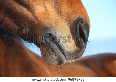Brown horse nose close up - stock photo