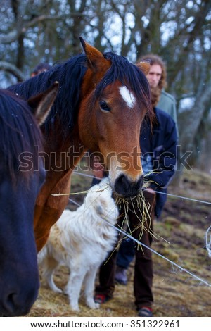 Brown Horse, on background  white dog with man - stock photo