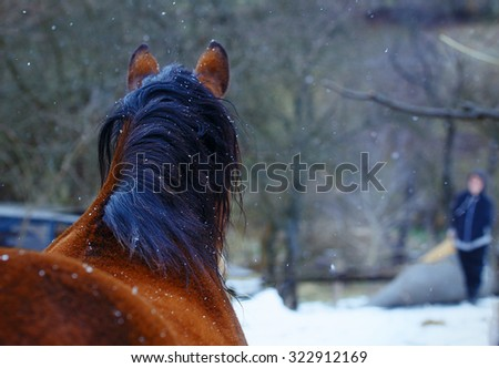 Brown Horse , on background with man - stock photo