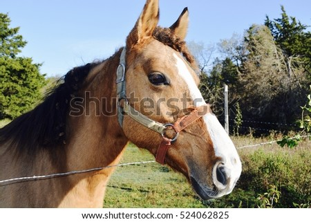 Brown horse on the farm head portrait