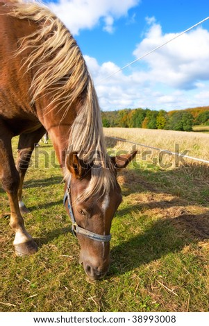 Brown horse outdoor on a sunny day