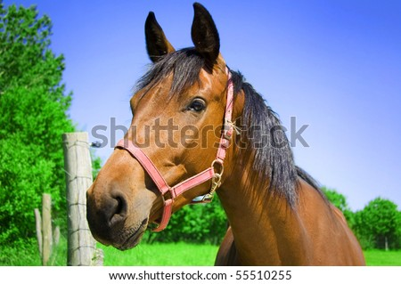 Brown horse. Portrait of brown horse. - stock photo