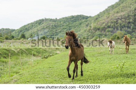 Brown horse running on green field