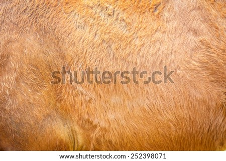 brown horse's fur texture - stock photo