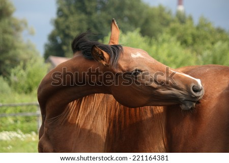 Brown horse scratching itself in summer - stock photo