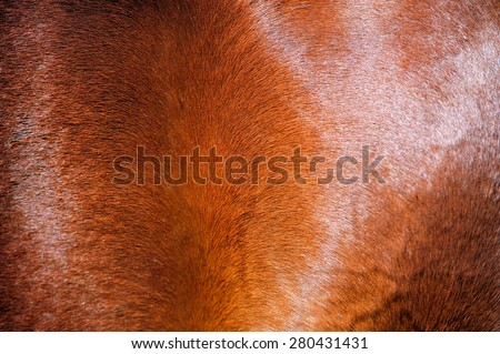 Brown horse skin. Background. - stock photo