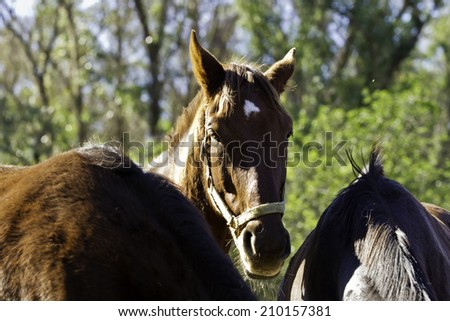 Brown horse standing in the middle of two others while eating some hay - stock photo