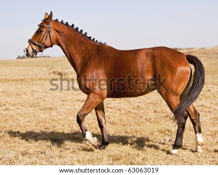 Brown horse standing in winter on dry brown grass - stock photo