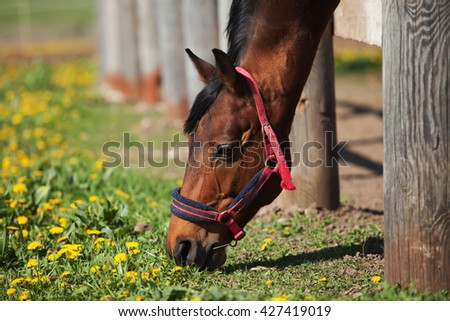 brown horse stands behind the fence. eat grass