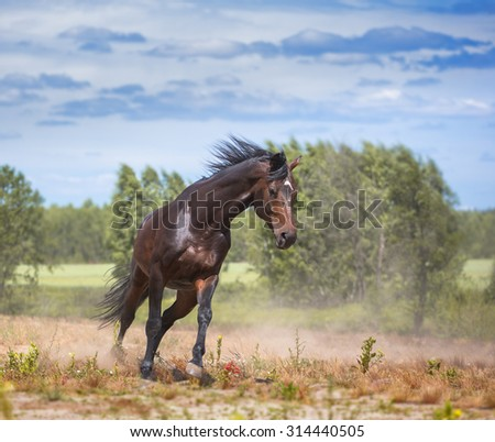 Brown horse stay in the field