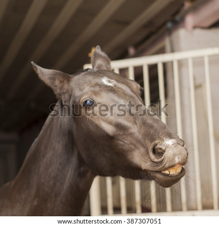 brown horse with a big white blaze on the head is in the stable are close to the door - stock photo