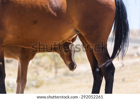 brown horse with a foal on the farm - stock photo