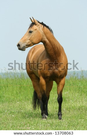 Brown horse with black legs