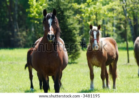 Brown horse with black mane on foreground and two horses behind.