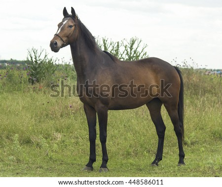brown horse with black mane walking in a field on the green grass against a white sky