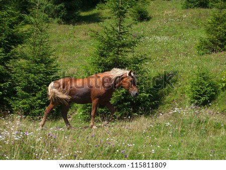 brown horse with blonde mane and tail walking on green grass - stock photo