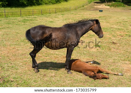 Brown horse with foal in meadows - stock photo