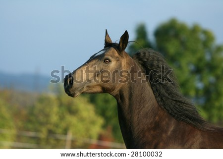 Brown horse with nice eye