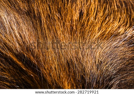 brown horsehair background.