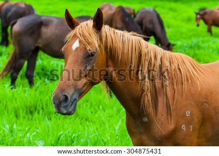 Brown horses eating grass on a farm.