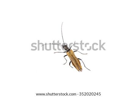 Brown insect isolated on the white background