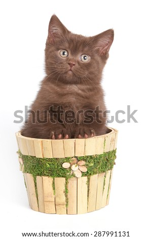 Brown kitten sitting in a basket, and looking at the camera (isolated on white) - stock photo