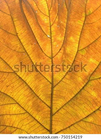 Brown leaf texture background