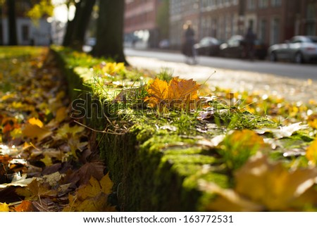 Brown leaves on a green wall in a park on a autumn day, with cyclists in the background. - stock photo