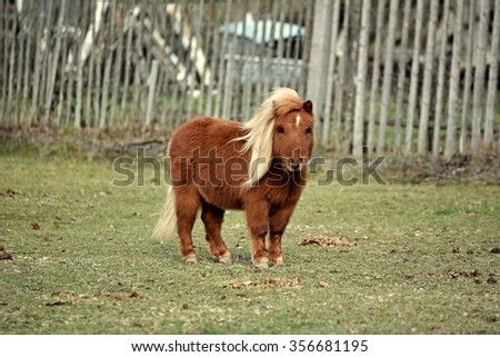 Brown Little Pony - stock photo
