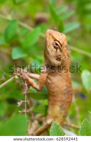 brown lizard basking on branch in nature