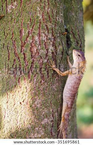 Brown lizard,tree lizard, details of lizard skin stick on the tree. - stock photo