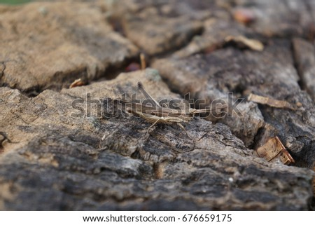 locust stock images royaltyfree images  vectors