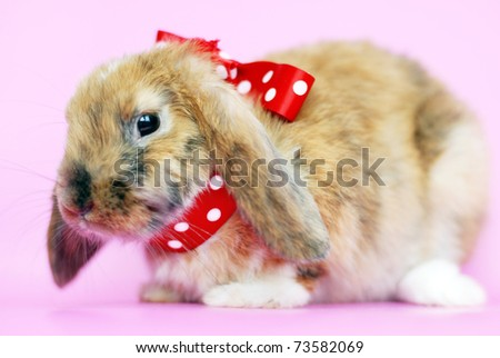 Brown lop-eared rabbit with red bow - stock photo