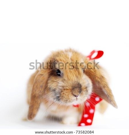 Brown lop-eared rabbit with red bow, isolated on white - stock photo