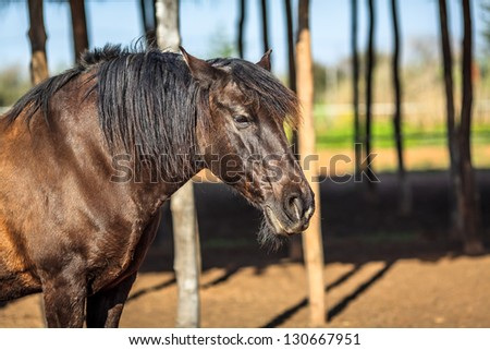 Brown male horse looking for someone - stock photo
