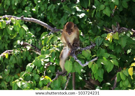 Brown monkey sitting at a green tree branches